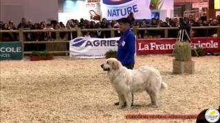 Grand Défilé - Concours des animaux 2016