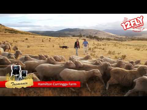 12flyTV - Dorothy at Curringa Farm, Hamilton, Tasmania