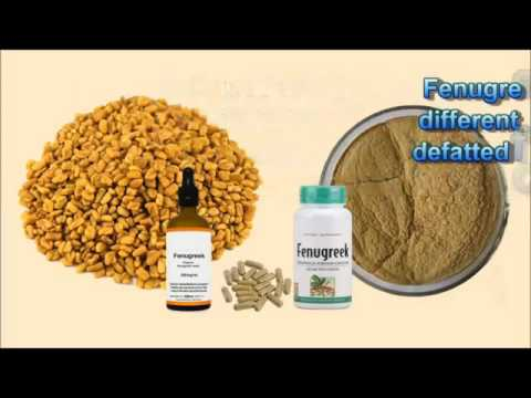 benefit from fenugreek naturally with Doctor Al Hashimi