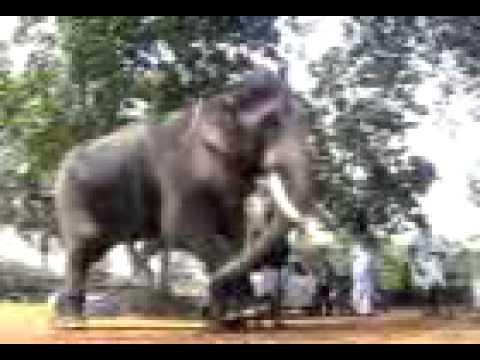 Thechikotukavu  Ramachandran