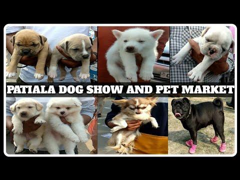 Patiala Dog Show 2020 || Kci Dog Show || Dog Shows || Wholesale Dog Market || Scoobers