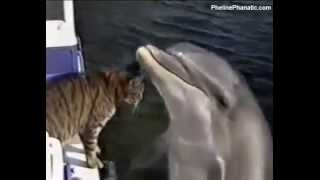 Cat Kisses Dolphin  you gotta see this!