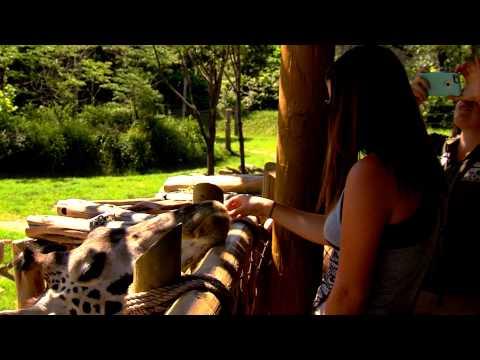 Giraffe Feeding - Cincinnati Zoo