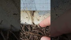 Finding Termites During Home Inspection