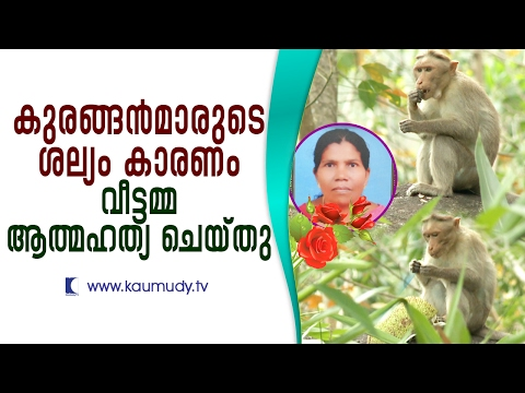 Fed up of crazy monkeys, housewife commits suicide | Secret File | Kaumudy TV