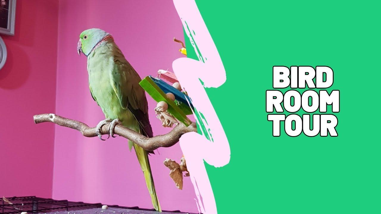 Bird Room Tour: Indian Ringneck Parakeet & Budgies [CC & Video Description]
