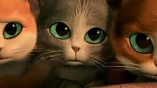 Кошачий клип. Аманда, Линда и Роуз