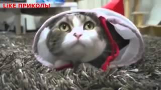 LiKE Приколы / самые классные и самые крутые приколы про котов кошек котиков и котят № 24