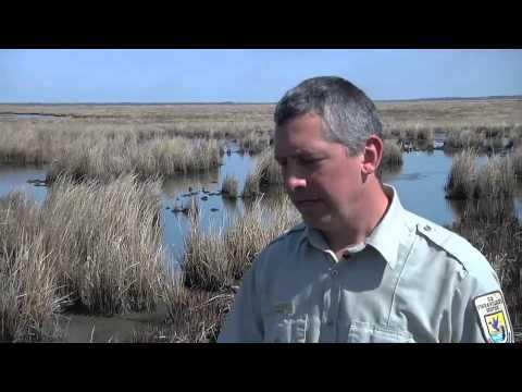 Blackwater National Wildlife Refuge - Everglades of the North