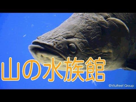 山の水族館/おんねゆ温泉北の大地の水族館/北海道北見市