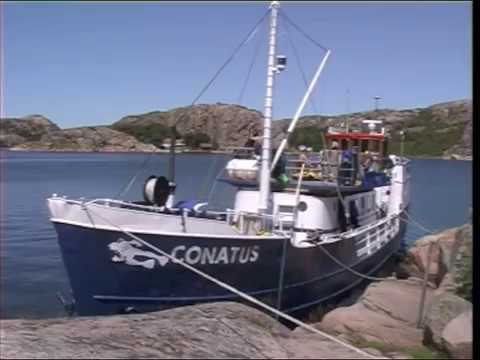 Live Aboard Diving m/s Conatus 1999