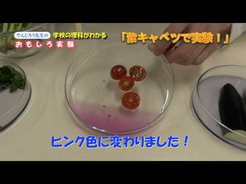 P8 紫キャベツで実験