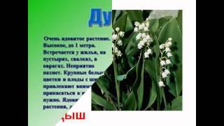 дикие растения