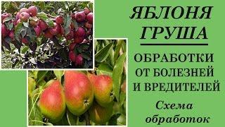 видео Вредители яблонь