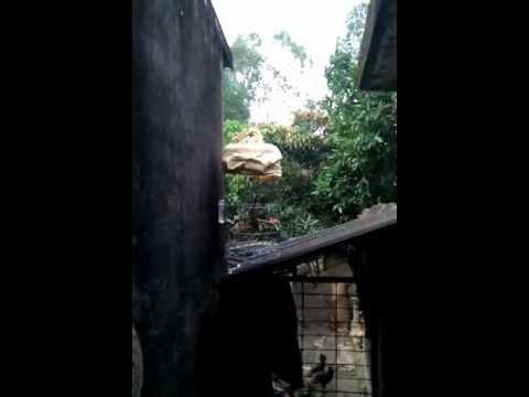Chào mào quê nhà của bố em 2ndFACE chimcanhvn.com