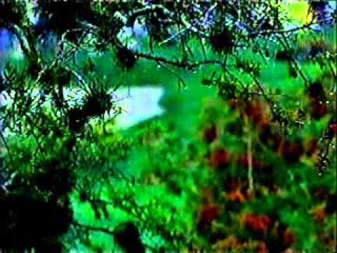 2003 Bay Hill Invitational golf final round part 1 of 2