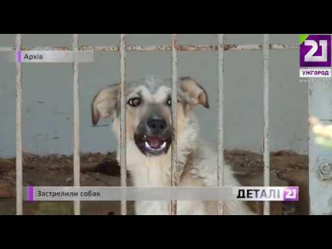 21 channel: Застрелили собак