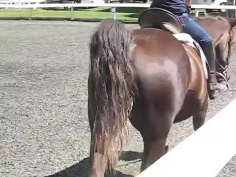 Funny horse fart, three times! - YouTube  |Funny Horse Farts