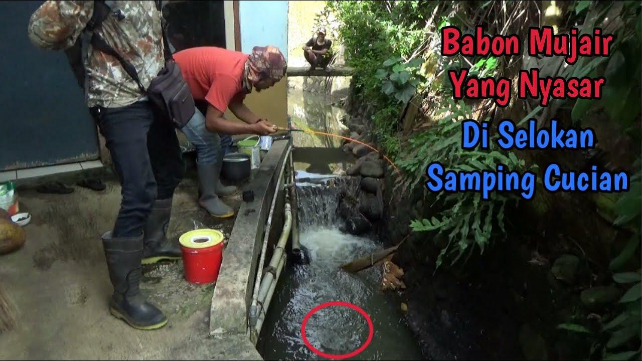Strike Mujair Babon Di SeLokan Samping Cucian Warga