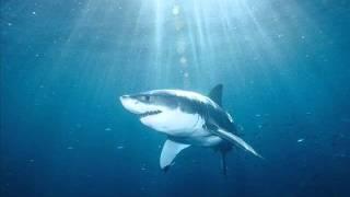 Limp Bizkit - Shark Attack (HQ) Studio Version