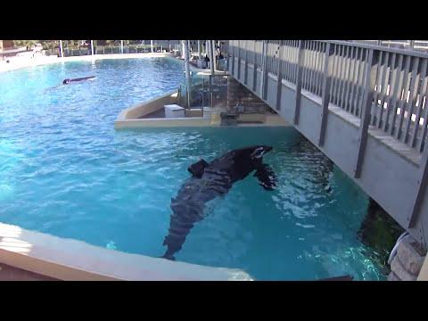 Ulises stealing Keets Corner, SeaWorld San Diego