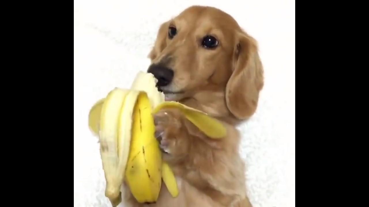 Dog Fruit Eat