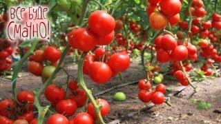 10 блюд из помидоров. Часть 2 — Все буде смачно. Сезон 4. Выпуск 6 от 11.09.16