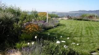 O'Connell Landscape Tiburon Roof Garden