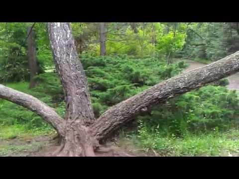 Stepanavan Dendropark  Ստեփանավանի դենդրոպարկ