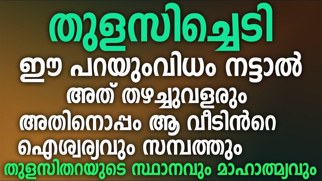 Download ഭാരതത്തിൻറെ വാസ്തുശാസ്ത്രം ഒരു വിസ്മയം തന്നെയാണ്,കൃഷ്ണതുളസി,രാമതുളസി,thulasi malayalam,thulasithara