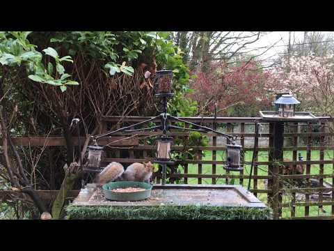 Bird Table Uk Shropshire Live Stream 221
