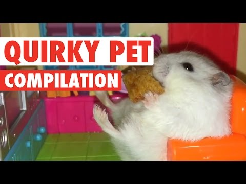 Quirky Pets || Funny Pet Compilation