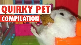 Quirky Pets    Funny Pet Compilation