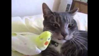 Самая странная дружба между животными