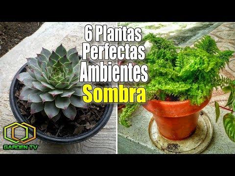 6 PLANTAS PERFECTAS PARA AMBIENTES DE SOMBRA