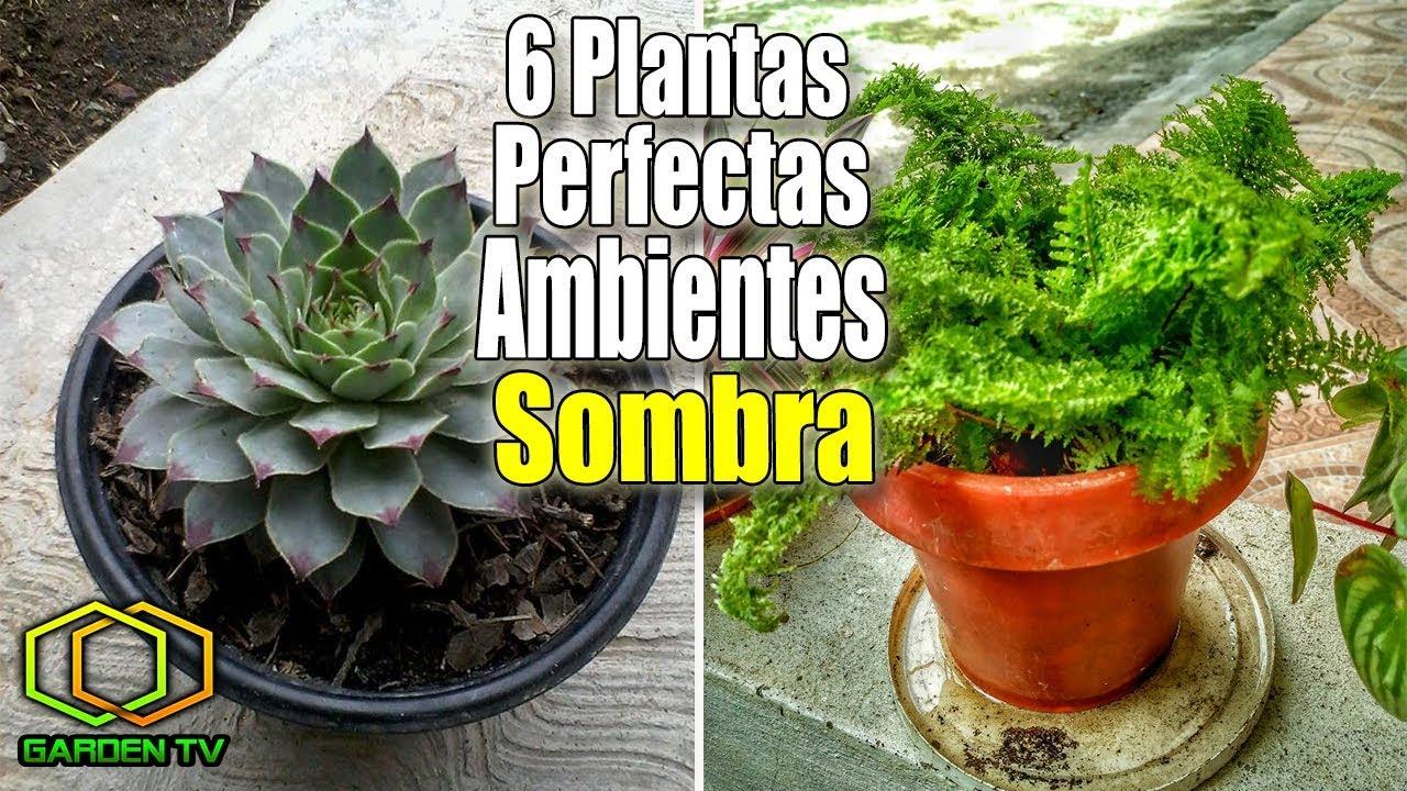 6 plantas perfectas para ambientes de sombra youtube - Plantas de sombra ...