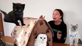 KEDİLERİME EV ALDIM - Newchic- Eğlenceli  Video