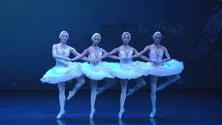 Pas de Quatre z baletu Labutie jazero - VIVA BALET!