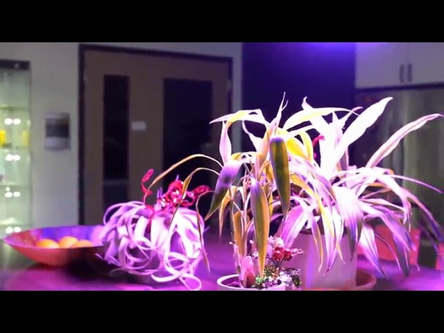 Yehsence 1500w Led Grow Light With Bloom And Veg Switch Youtube