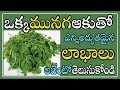 Find out the Amazing Benefits of Drumstick Leaves ||  Latest Telugu Healthcaretips 2017