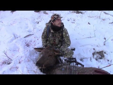 Spot & Stalk Elk 21 yards (Full Hunt)
