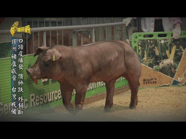 【台灣演義】#豬在台灣 2020.09.13 | Taiwan History
