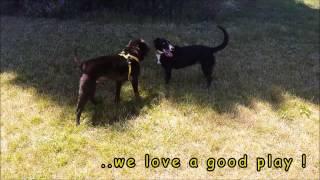 Dogs Trust Shoreham - Jumbles