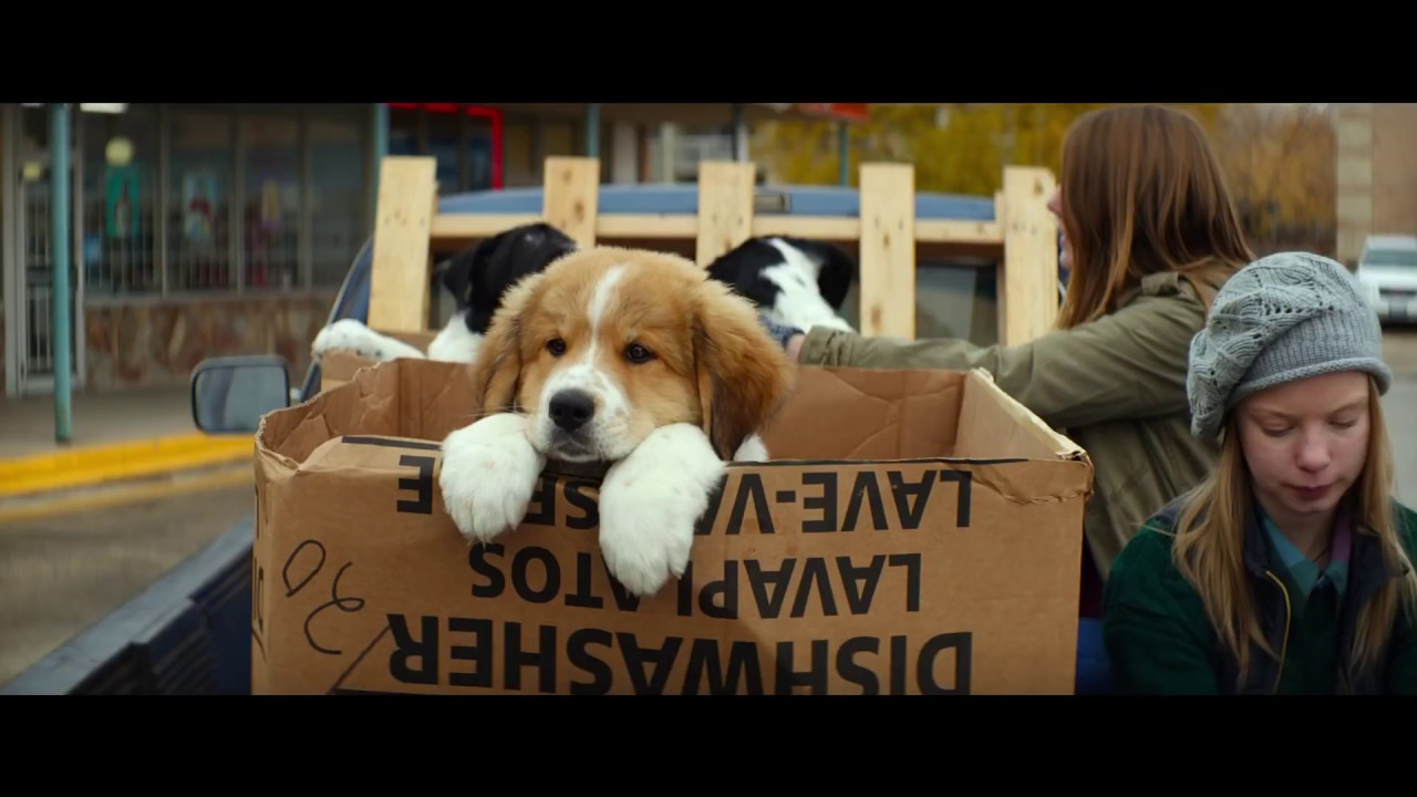 Watch A Dog S Purpose Streaming