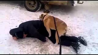 Собака трахает человека.Прикол ржака.