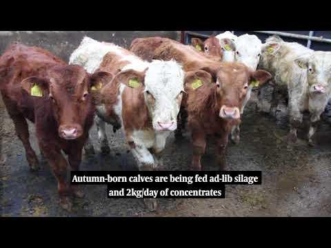 BETTER Farm NI – Barry Carty, Garrison, Co Fermanagh
