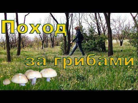 Небольшой поход   Грибы (майский гриб)   Степные растения