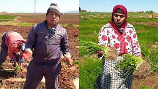 لالة حادة تشارككم طريقة زراعة البصل في مزرعتها
