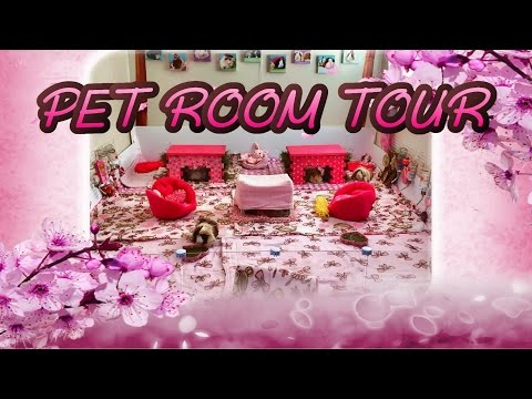 Guinea Pig Pet Room Tour 2016