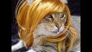 Кошки, собаки и другие 6 ● Приколы с животными осень 2014 ● Funny animals ● Cute Cats & Dogs ● Compi